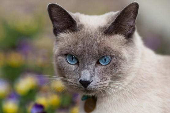 Qué es la pica, el trastorno que hace que algunos gatos coman tierra