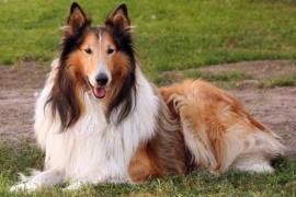 Se cansó de los ladridos del perro de su vecino y lo mató de un disparo