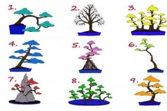 ¿Qué árbol elegís?: el test que determina qué trabajo es el ideal para vos