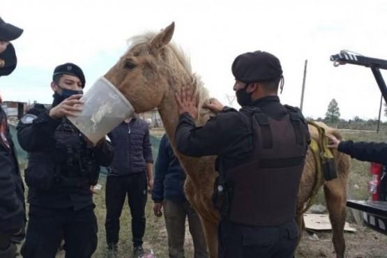 Policías rescataron a un caballo desnutrido que apenas podía mantenerse en pie
