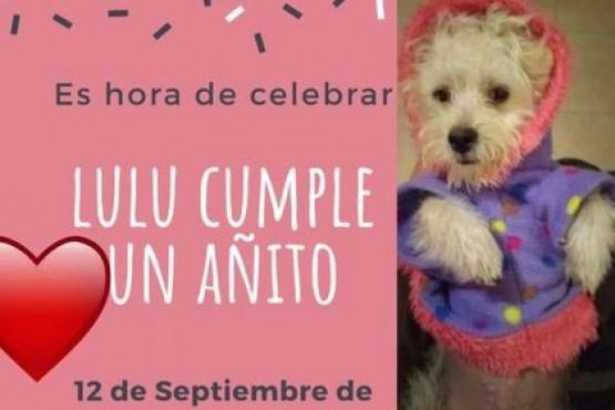Una funcionaria fue apartada de su cargo por festejar el cumpleaños de su perro con invitados