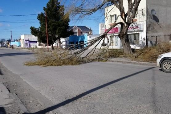 Cayó un árbol por los intensos vientos