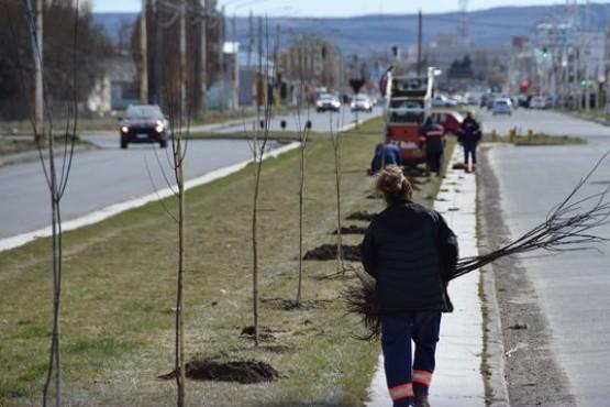 Plantaron rosales y ciruelos en la Avenida Gregores