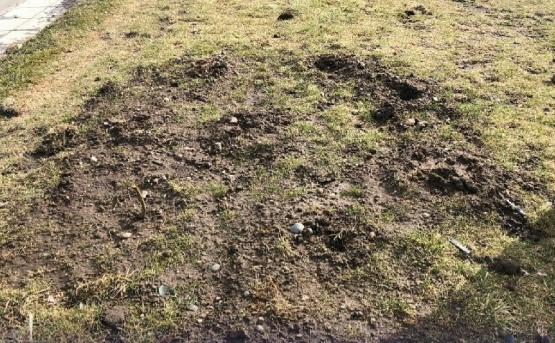 Vergonzoso: robaron plantines que plantó ayer el Municipio