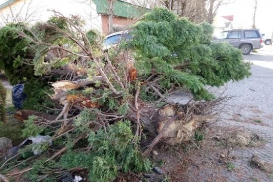 Importante choque dejó severos daños materiales