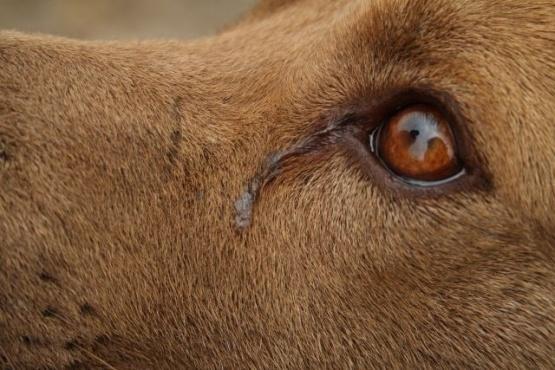 Juicio por maltrato animal: el fiscal Moyano presentó recusación al Juez Castro