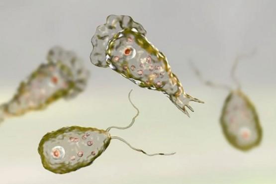 Alerta por una ameba