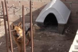 """Denuncia por maltrato animal: """"El perro se come sus propios desperdicios"""""""