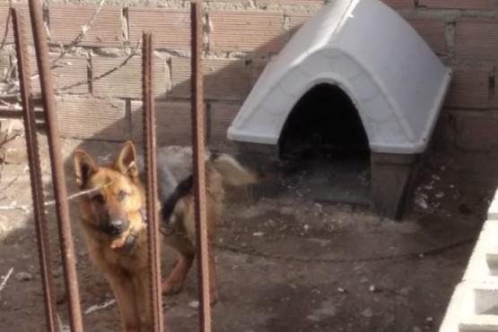 Denuncia por maltrato animal: