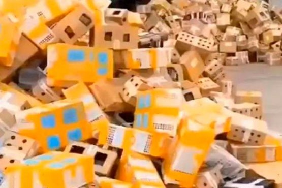 Aparecieron 5000 mascotas muertas en cajas de cartón