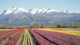La Temporada de Tulipanes apuntará al público local