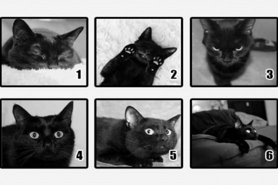 Elegí el gato negro que más llame tu atención y descubrí a qué temerle en el futuro