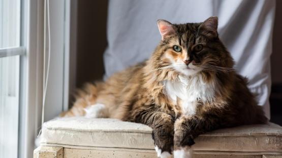 Lloró la muerte de su gata, la enterraron, pero horas después apareció viva