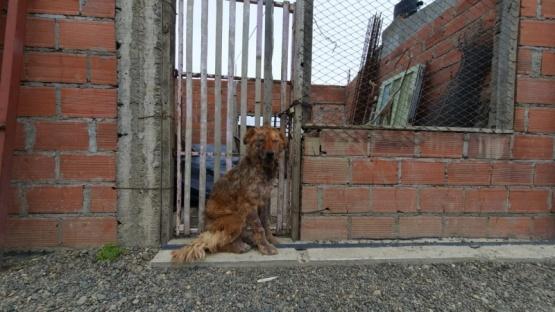 Municipio intervino por un perro con sarna