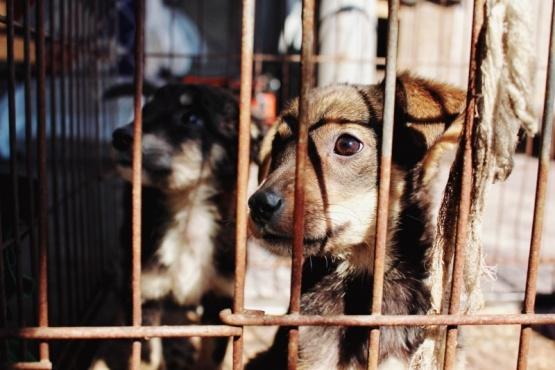 Hallaron perros muertos en un freezer y más de 100 hambrientos