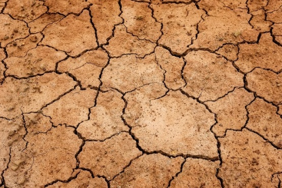 A pesar de los graves problemas de desertificación, Santa Cruz prohíbe la protección de la naturaleza