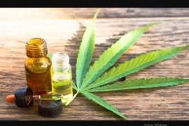 Presentan proyecto de ley para cambiar la legislación sobre cannabis medicinal