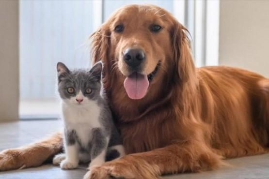 Testearon a mascotas para comprobar si se contagian de coronavirus