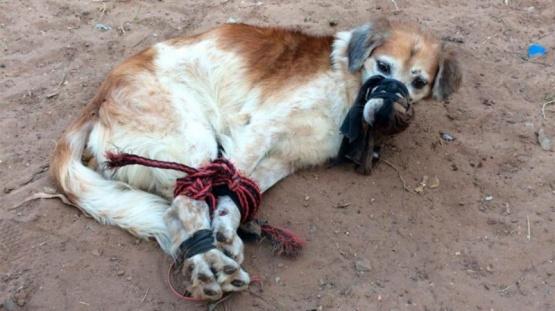 Abandonaron a un perro amordazado y atado con cables en un baldío