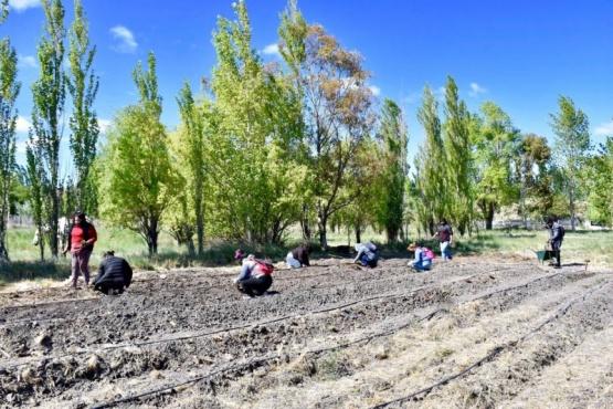 Banco de alimentos: se avanza en la producción de frutillas