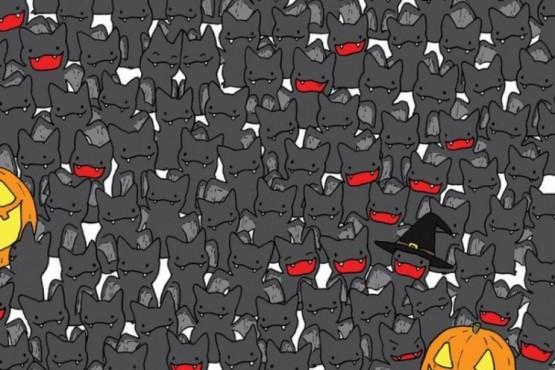 Test visual: encontrá el gato negro oculto entre los murciélagos