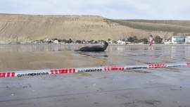 Se recomienda precaución ante la presencia de ejemplares de foca leopardo