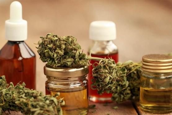 Cultivo y uso de cannabis medicinal podría ser aprobado mañana por la Legislatura