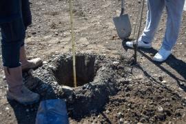 Se realizaron tareas de mantenimiento y forestación