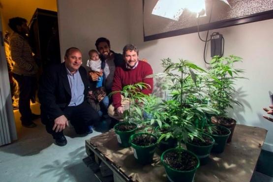 Un ciudad argentina empieza a plantar marihuana para hacer aceite de cannabis