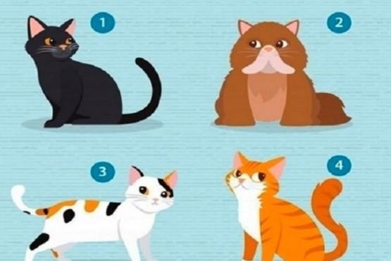 ¿Qué gato elegís?: tu elección te guiará por nuevos caminos sentimentales