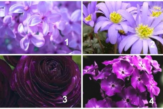 Test psicológico en tonos púrpura: elegí una imagen y descubrí otros aspectos de tu personalidad