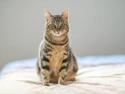Cuáles son las fobias más comunes de los gatos