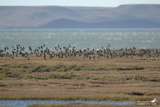 Estuario del río Gallegos: Sitio de Importancia Internacional para las Aves Playeras