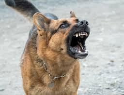 Diputado quiere consensuar una ley para el control poblacional de perros y gatos