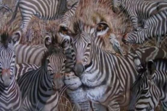 ¿Qué animal ves primero? El test psicológico que describe a la perfección tu personalidad