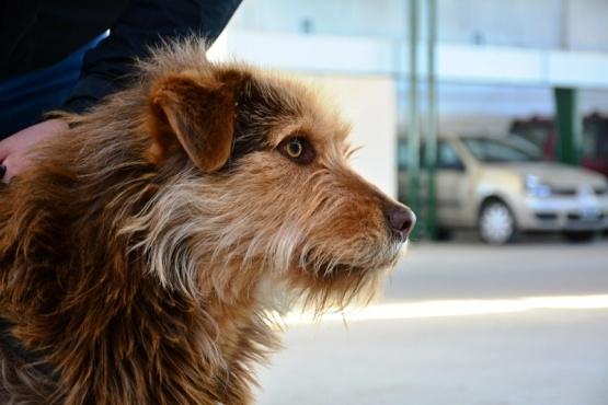 Santa Cruz| Perros y gatos, un asunto legislativo