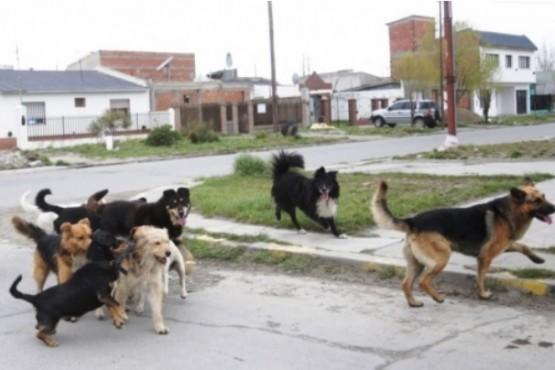 El proyecto para capturar mascotas que estén en las calles de Río Gallegos