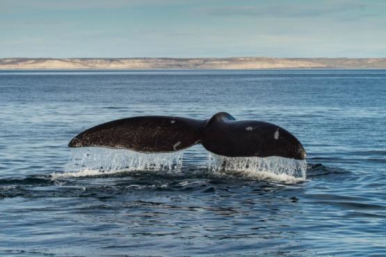 Se viene una película sobre las ballenas de Peninsula de Valdéz
