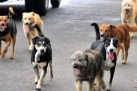Alerta: hallan nuevo tipo de coronavirus que se origina en perros
