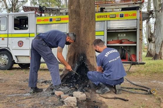 Bahía Blanca| Prendieron fuego la base de un árbol de 120 años