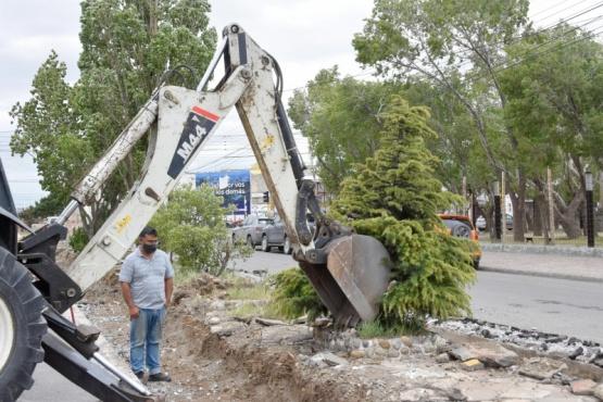 Río Gallegos| Municipio trasladó árbol de la San Martín al Museo de los Pioneros