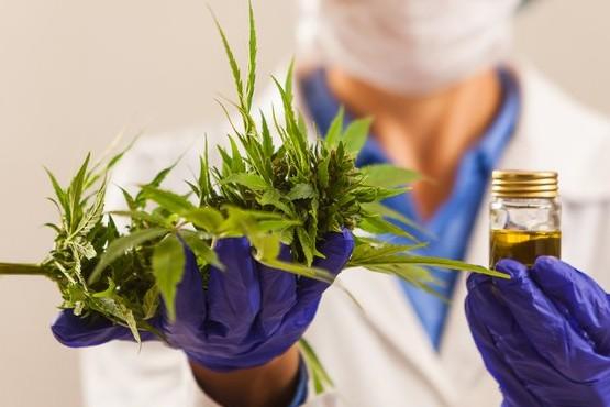 La ONU eliminó al cannabis de la categoría de drogas más peligrosas