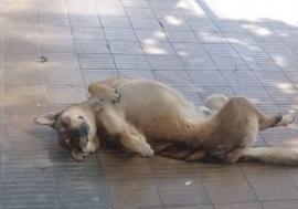Río Gallegos | Pochoclo, el perro influencer que sumó miles de likes