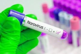 Norovirus: expertos estiman que en 4 meses podrían producirse 65 millones de contagios