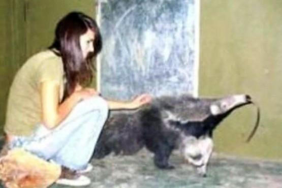 La mató un oso hormiguero y el zoológico deberá pagarle 101 millones a su familia