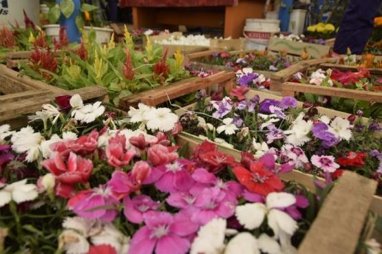Río Gallegos  Municipio entregará plantines por el 135° Aniversario