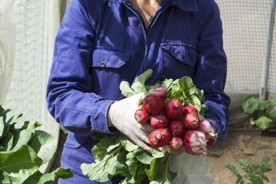 Caleta Olivia| La primera cosecha de verduras del Invernadero será donada