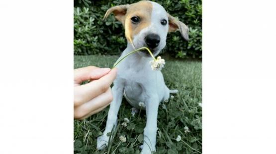 El perro de Natalia Oreiro.