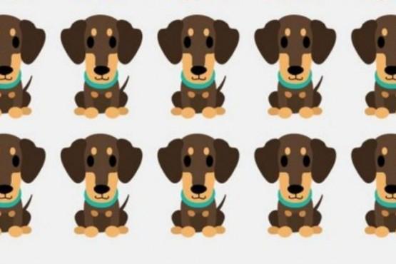 Reto viral: encontrar al cachorro diferente entre los demás