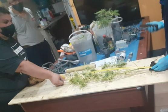 Denunció a su hijo para que la policía lo saque de la casa y encontraron marihuana